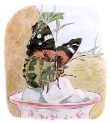 Beatrix Potter 12