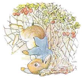 Beatrix Potter 7