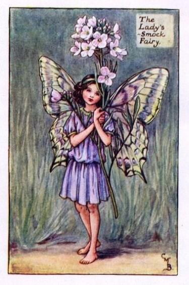 Ladys-Smock-Flower-Fairy