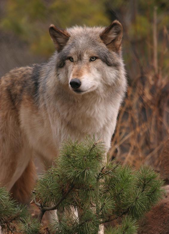 ulv snl no